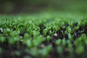 Factores de indexación orgánica del 2020: Verdades y Mitos