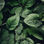 La importancia de un buen Embudo de Conversión